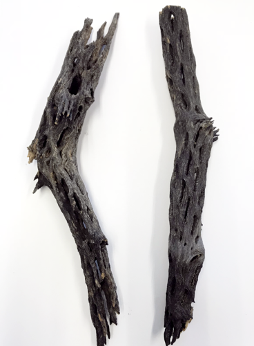 "2 Piece - Cholla Wood - 8"" Length"