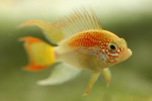 Tristan's Tropical Fish Store Logo
