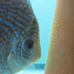 Tropical Fish Keeper SWFL Store Logo