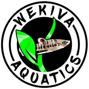 Wekiva Aquatics Logo