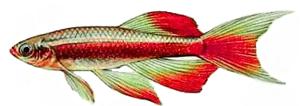 WhitecloudDynasty Logo