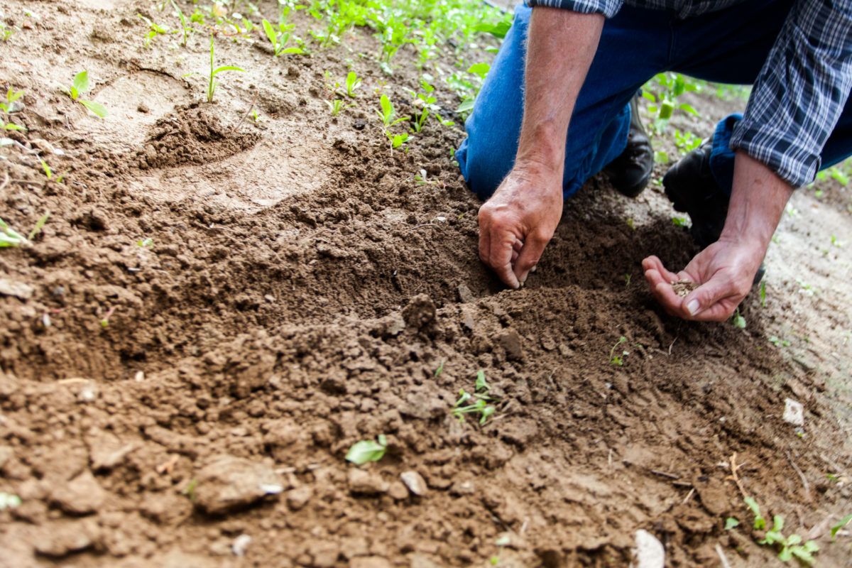6-Ways-to-Keep-Back-Pain-Out-of-Your-Garden