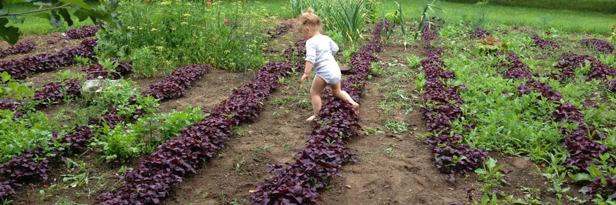 Grace with Young Red Shiso