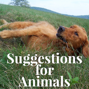 Suggestionsforanimals