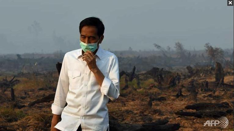 Indonesia Needs 3 Years To Tackle Haze: President Joko Widodo. Image A. Image size:560x420px