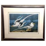 Tropic Bird By J.J. Audubon