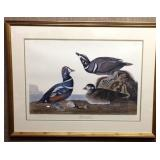 Harlequin Duck by J.J. Audubon