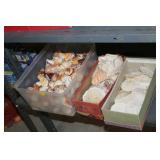 Lot of Sea Shells & Sand Dollars