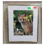 Framed print of a fox kit. Nice bright colors.