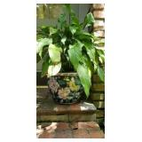 Asian Style Planter with Peace Lily