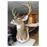 Deer Mount, Deer Only, 10 Pointer, Nice