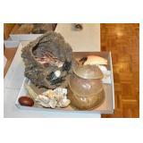 Sea Items, Horseshoe Shells,3