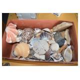 Vintage Shells, 1/2 of shoe box