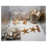 Lot of Decorative Shells
