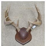 12 point antler mount