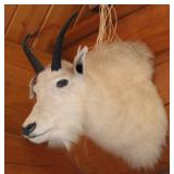 Mountain Goat mount