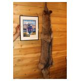 Outdoor Adventure Gene Fullerton Signed picture and Coyote pelt