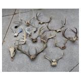 Lots of Deer and other animal racks
