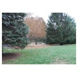 Exellant Landscaping with Mature Trees
