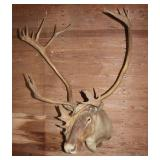 Cariboo wall mount