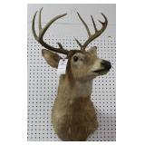 9 PT. WHITE TAIL BUCK MOUNT