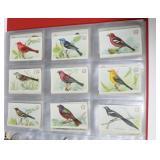 Album, 2 bird cards from church soda, Brook