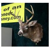8 point trophy mount