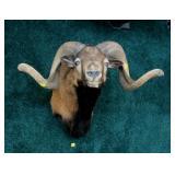 Ram trophy Mount