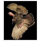 Full turkey mount, gobbler
