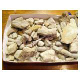 Dinasour Fossils