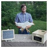 Cole Spivey  (Poultry Project)
