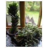 3 House Plants