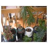 4 House Plants