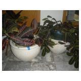 2 House Plants