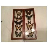Set of 2 Butterfly displays
