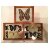 Set of 3 Butterfly displays (b)