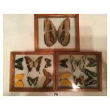 Set of 3 Butterfly & Moth displays (c
