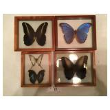 Set of 4 Butterfly Displays (d)