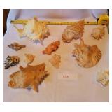 11 Pieces Murex/Conch Seashells