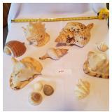 11 Pieces Cone/Conch Seashells