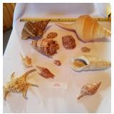 12 Pieces Cones/Conches Seashells