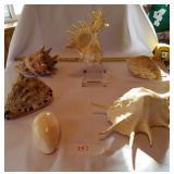 6 Pieces of Cone/Conch Type Seashells