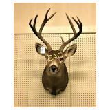 8pt Buck Shoulder Mount