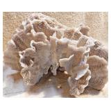 #51a  Large Section Of Fan Coral