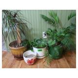3 Live Plants & 2 Ceramic Pots