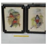 Pair of very pretty bird pictures