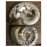 Set of two fossils