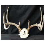 4×4 Deer Antlers