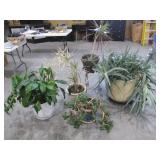 mature plants>
