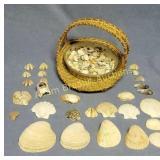Large assortment seashells & wicker basket